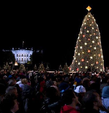 national christmas tree lighting 2010 national christmas tree - Washington Dc Christmas Tree