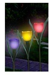 Solar Powered Tulips